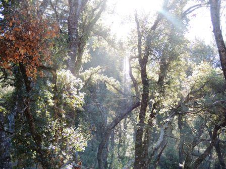 An Oak grove near his house.